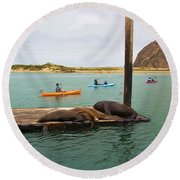 Curious About Sea Lions Round Beach Towel
