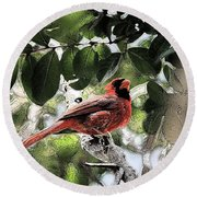 Round Beach Towel featuring the photograph Daddy Cardinal by Donna G Smith
