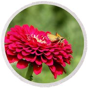 Round Beach Towel featuring the photograph Dahlia's Moth by Elizabeth Winter