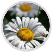 Daisies Aglow Round Beach Towel