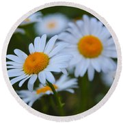 Round Beach Towel featuring the photograph Daisy by Athena Mckinzie