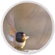 Dark-eyed Junco Taking Flight Round Beach Towel by Sean Griffin