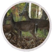 Round Beach Towel featuring the photograph Deer In Forest by Lydia Holly
