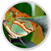 Round Beach Towel featuring the photograph Dido Longwing Butterfly by Peggy Franz