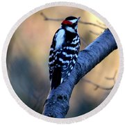 Round Beach Towel featuring the photograph Downy Woodpecker by Elizabeth Winter