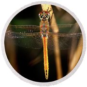 Round Beach Towel featuring the photograph Dragon Fly 1 by Pedro Cardona
