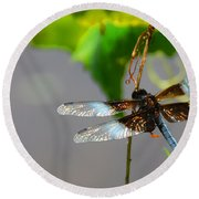Round Beach Towel featuring the photograph Dragonfly by Cindy Manero