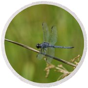 Round Beach Towel featuring the photograph Dragonfly by Heidi Poulin
