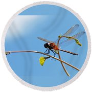 Round Beach Towel featuring the photograph Dragonfly On A Vine by Kay Lovingood