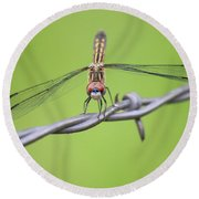 Round Beach Towel featuring the photograph Dragonfly On Barbed Wire by Penny Meyers