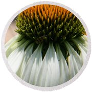Droopy Coneflower Daisy With Bug Round Beach Towel