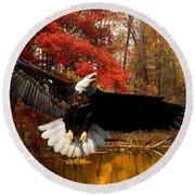 Round Beach Towel featuring the photograph Eagle In Autumn Splendor by Randall Branham