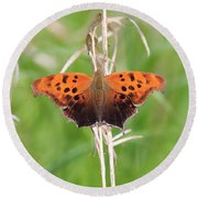 Round Beach Towel featuring the photograph Eastern Comma Butterfly by Penny Meyers