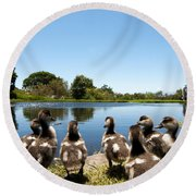 Egyptian Geese Round Beach Towel