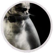 Round Beach Towel featuring the photograph El Kitty by Jessica Shelton