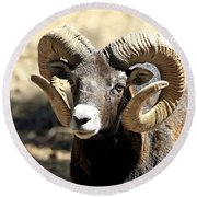 European Big Horn - Mouflon Ram Round Beach Towel