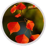Round Beach Towel featuring the photograph Fall Color 2 by Dan Wells