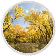 Fall Leaves In New Mexico Round Beach Towel