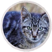 Feral Kitten Round Beach Towel