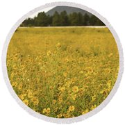 Field Of Yellow Daisy's Round Beach Towel