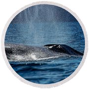 Round Beach Towel featuring the photograph Fin Whale Spouting by Don Schwartz