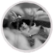 Round Beach Towel featuring the photograph Find The Kitty by Jeanette C Landstrom