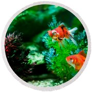 Round Beach Towel featuring the photograph Fish Tank by Matt Malloy