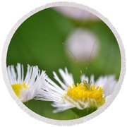 Round Beach Towel featuring the photograph Floral Launch-pad by JD Grimes