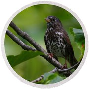 Fox Sparrow Round Beach Towel
