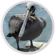Round Beach Towel featuring the photograph Friendly Pelican by Carla Parris