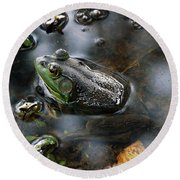 Round Beach Towel featuring the photograph Frog In The Millpond by Kay Lovingood