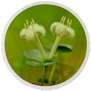 Round Beach Towel featuring the photograph Fuzzy Blooms by JD Grimes