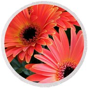 Round Beach Towel featuring the photograph Gerbera Bliss by Rory Sagner