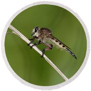 Giant Robber Fly - Promachus Hinei Round Beach Towel by Daniel Reed