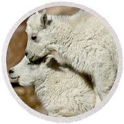 Goat Babies Round Beach Towel by Colleen Coccia