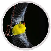 Round Beach Towel featuring the photograph Goldfinch High Wire Act by Randall Branham