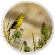 Goldfinch On Lookout Round Beach Towel by Bill Pevlor