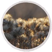 Round Beach Towel featuring the photograph Gone To Seed by Fran Riley