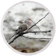 Round Beach Towel featuring the photograph Good Morning Dove by Elizabeth Winter