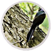Grackle 1 Round Beach Towel