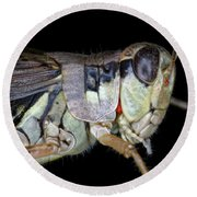Grasshopper With Parasitic Mite Round Beach Towel by Ted Kinsman