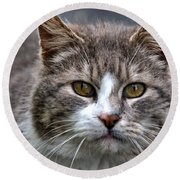 Gray Tabby Tux Cat Round Beach Towel