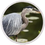 Great Blue Heron  Round Beach Towel by Jeannette Hunt