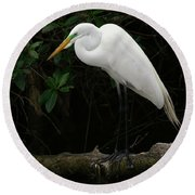 Round Beach Towel featuring the photograph Great Egret by Anne Rodkin