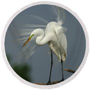 Great Egret Round Beach Towel by Bob Christopher