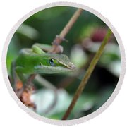 Round Beach Towel featuring the photograph Green Anole by Kay Lovingood