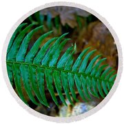 Round Beach Towel featuring the photograph Green Fern by Tikvah's Hope