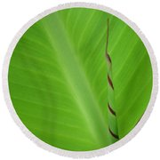 Green Leaf With Spiral New Growth Round Beach Towel