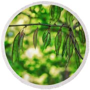 Green Redbud Seed Pods Round Beach Towel