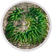 Green Sea Anemone Round Beach Towel
